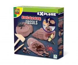 SES 25066 - Изкопаеми вкаменелости