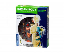 Детски анатомичен модел на Човешкото тяло Thames&Kosmos