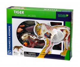 Детски анатомичен модел на Тигър Thames&Kosmos